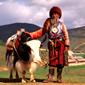 シャングリラ-チベット族のおじいさんとヤク