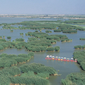寧夏-銀川-沙湖自然保護区