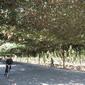 トルファン-葡萄溝